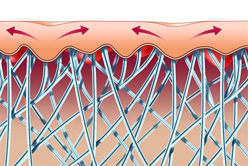 Размещение коллагеновых волокон в коже