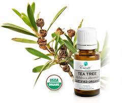Эфирное масло чайного дерева от прыщей