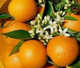 Эфирное масло апельсина от прыщей